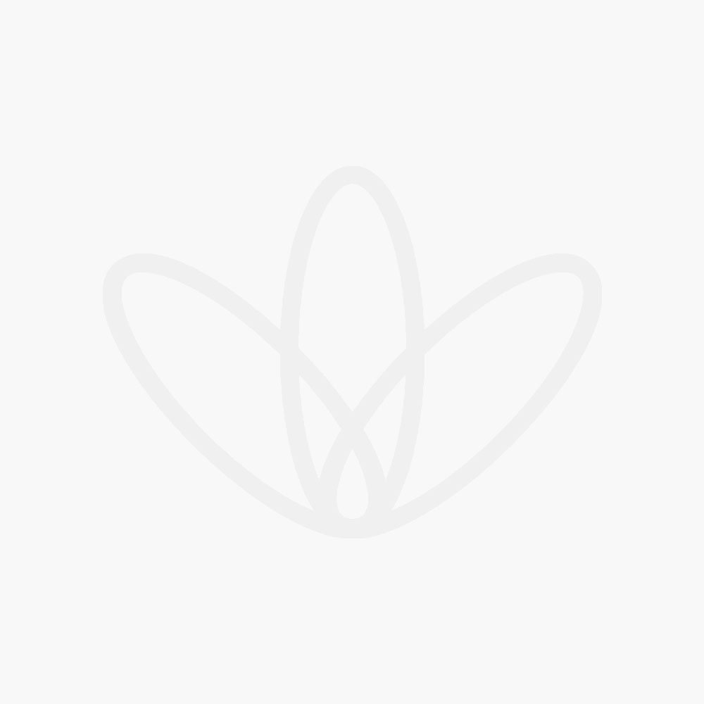 Wellness Shampoo & Shaving Bar Peppermint & Tea Tree 100g